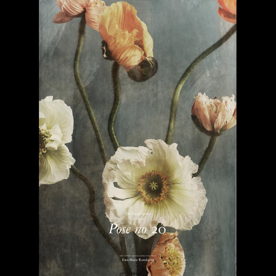 Kunstdruck Poppy Pose 20 Von Dry Things Heimelig Shop