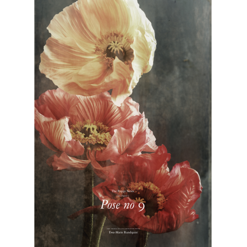 Kunstdruck POPPY POSE 9 - Dry Things
